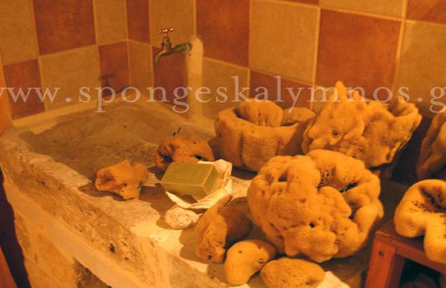 sponges-02.jpg