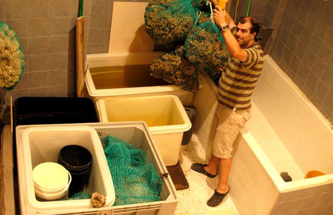 sponges-06.jpg